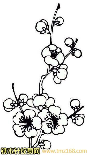 梅花线稿白描花朵精品纹身手稿定制武汉纹身铁木针刺