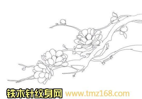 花朵梅花樱花桃花树枝线稿白描精品纹身手稿定制武汉